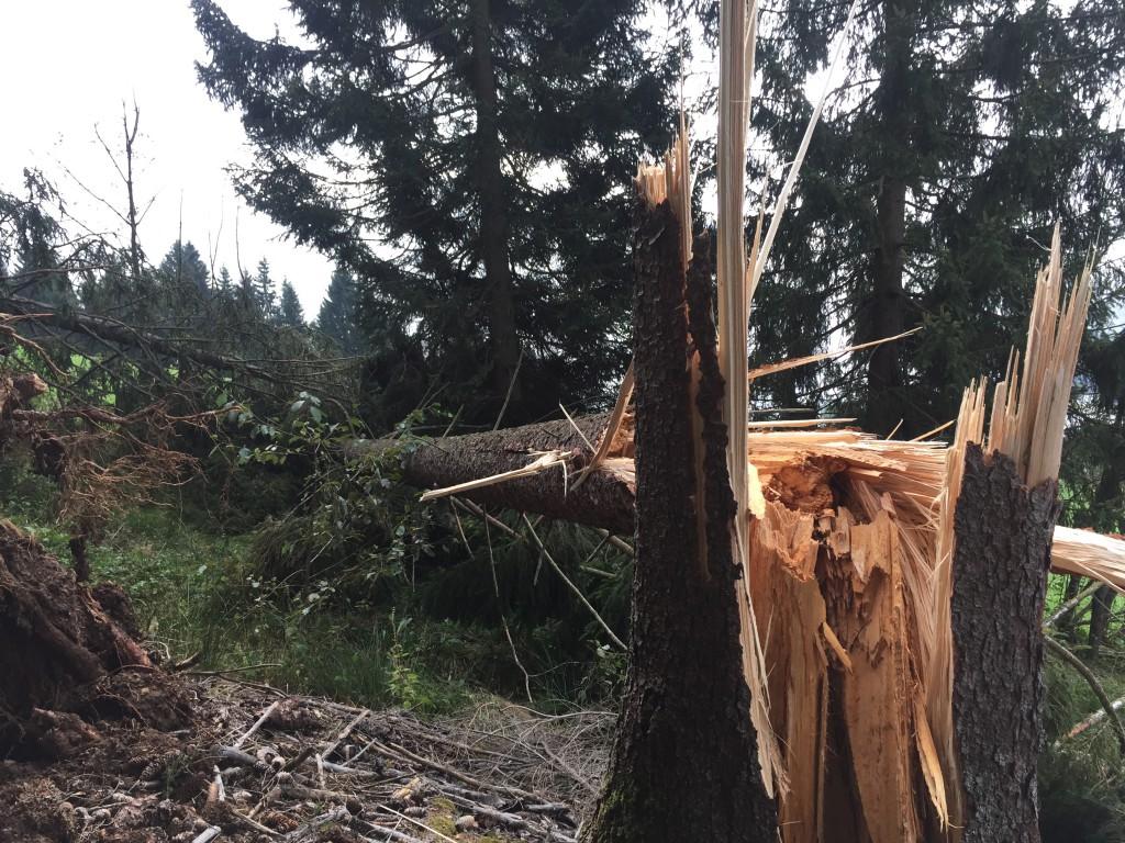 Sturmschäden auf dem Weg zur Steineralm, www.einfachmalraus.net