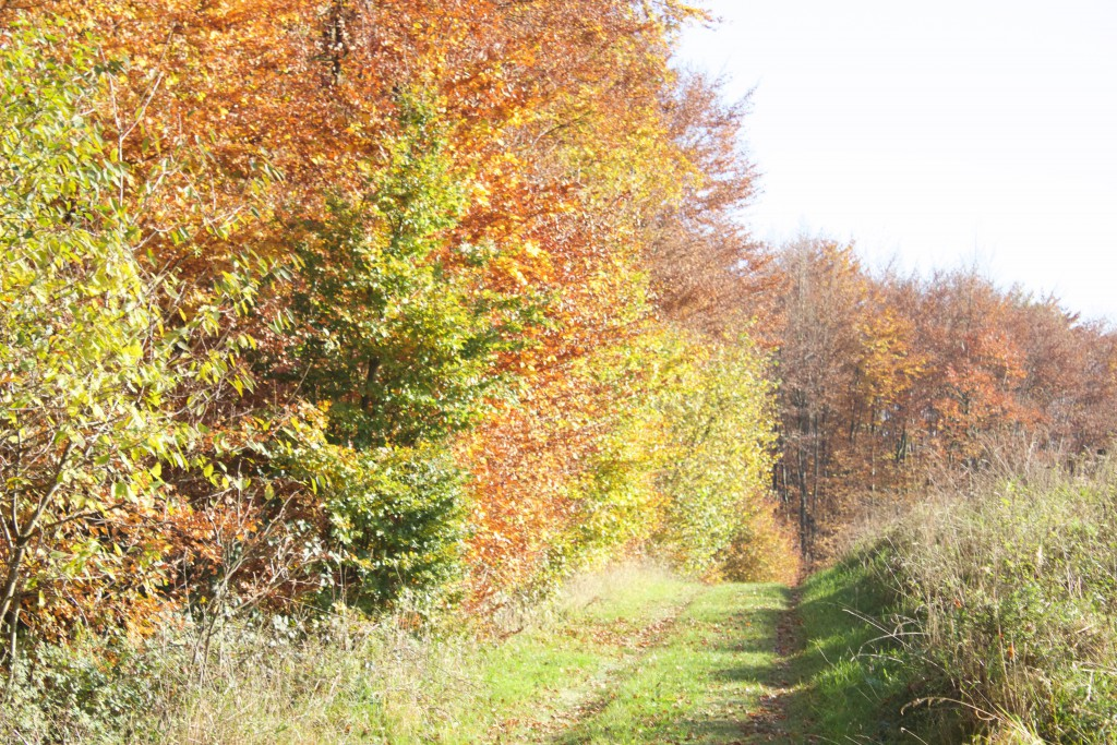 Wandern im Bergischen Land, www.einfachmalraus.net