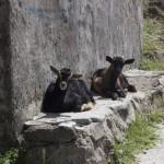 Schafe auf Lesbos, einfachmalraus.net